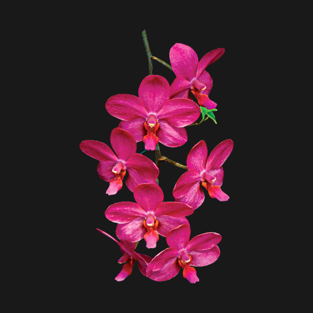Orchids - Cascade Magenta Orchids