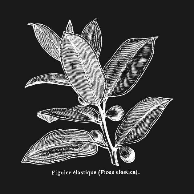Ficus Elastica (Rubber Tree) - White Print