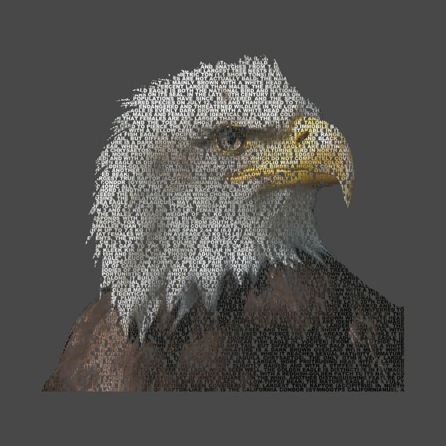Bald Eagle Info Graphic