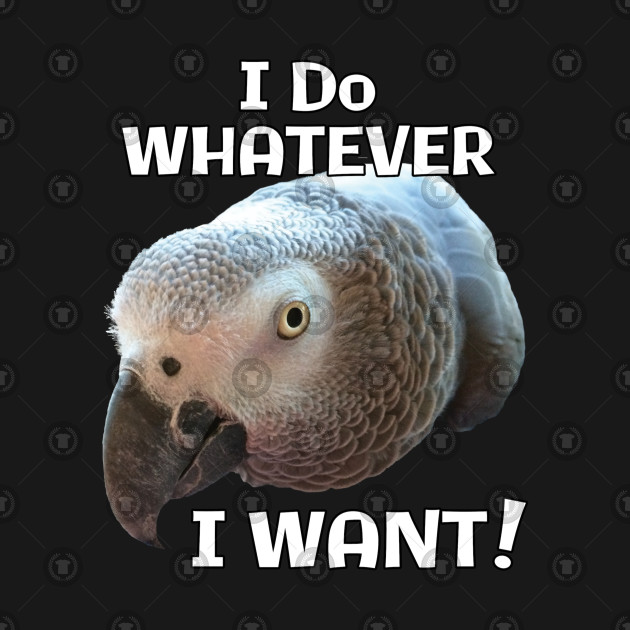 African Grey Parrot - Do Whatever I Want!