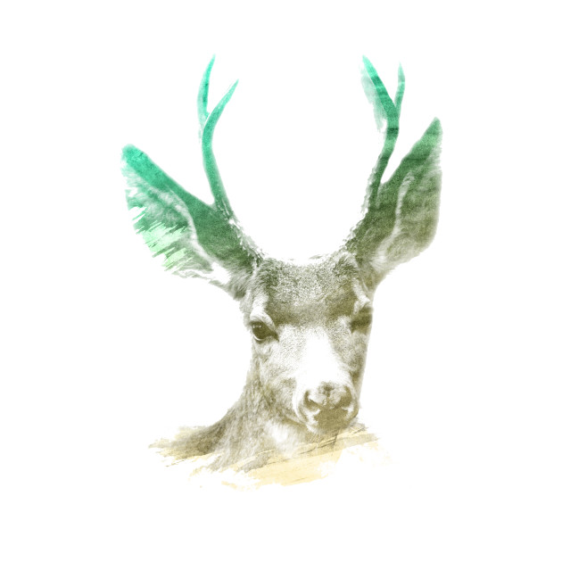 Deer Superimposed Watercolor