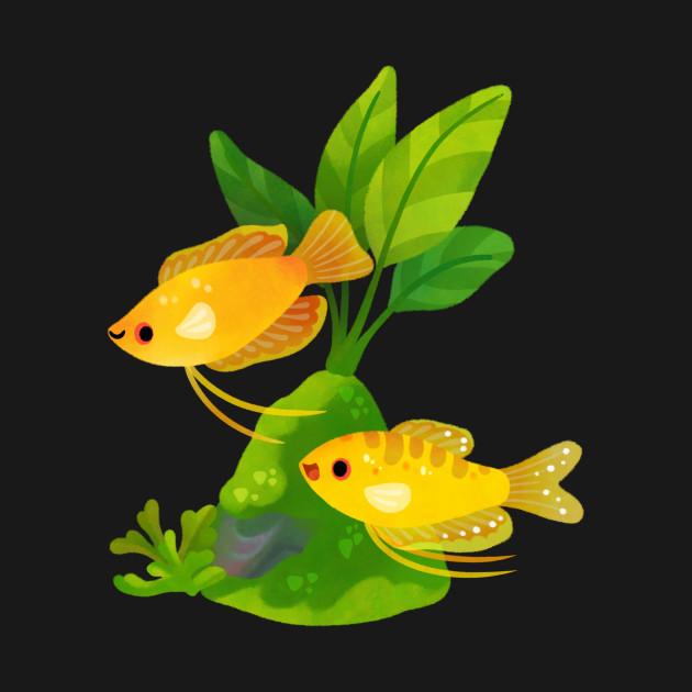 Freshwater fish and plants - Gourami
