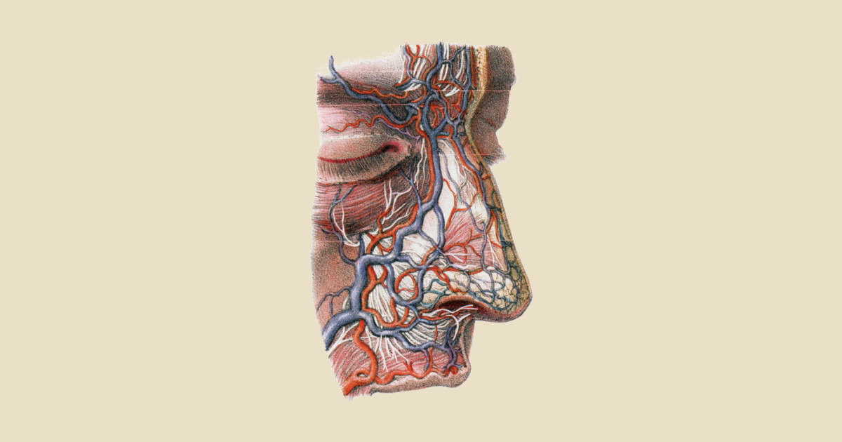 Human Anatomy Nose Nose T Shirt Teepublic