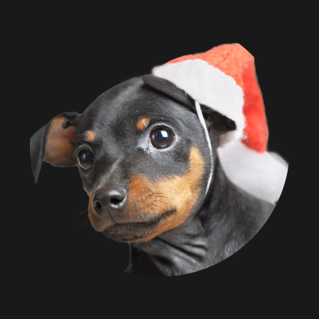 Cute Doberman Puppy in Santa Hat