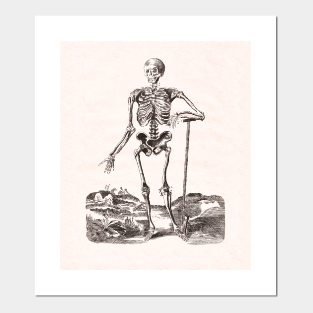 Skeleton Antique Anatomy Skeleton Posters And Art Prints Teepublic
