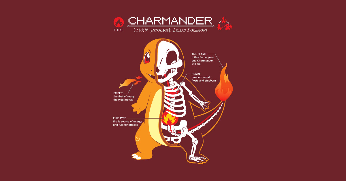 Charmander Anatomy Pokemon T Shirt Teepublic