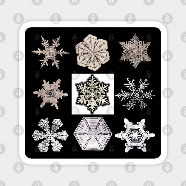 Wilson Bentley's Snowflakes
