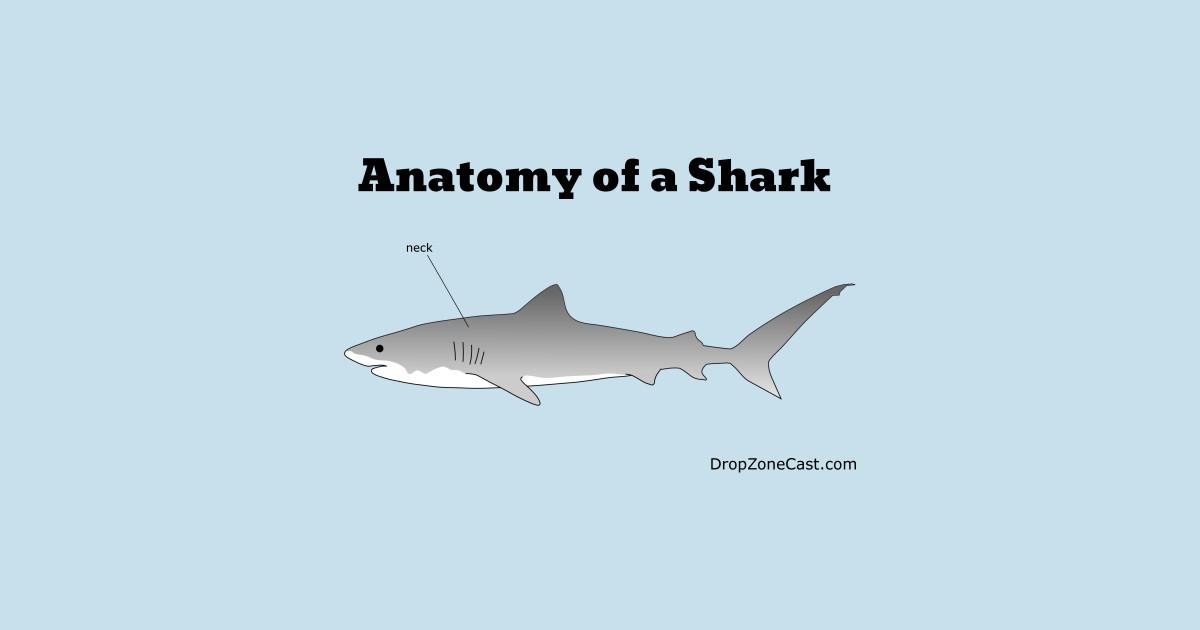 Anatomy of a Shark - Anatomy Of A Shark - T-Shirt | TeePublic