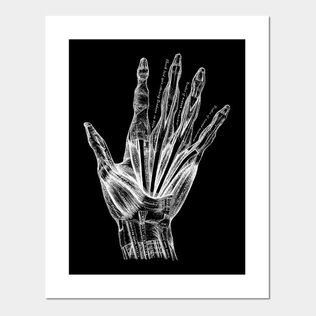 Vintage Human Hand Anatomy Anatomy Posters And Art Prints