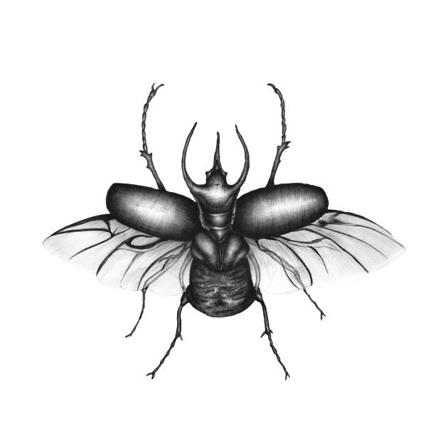 beetle wings insects tote teepublic Rhinoceros Hybrid beetle wings beetle wings beetle wings