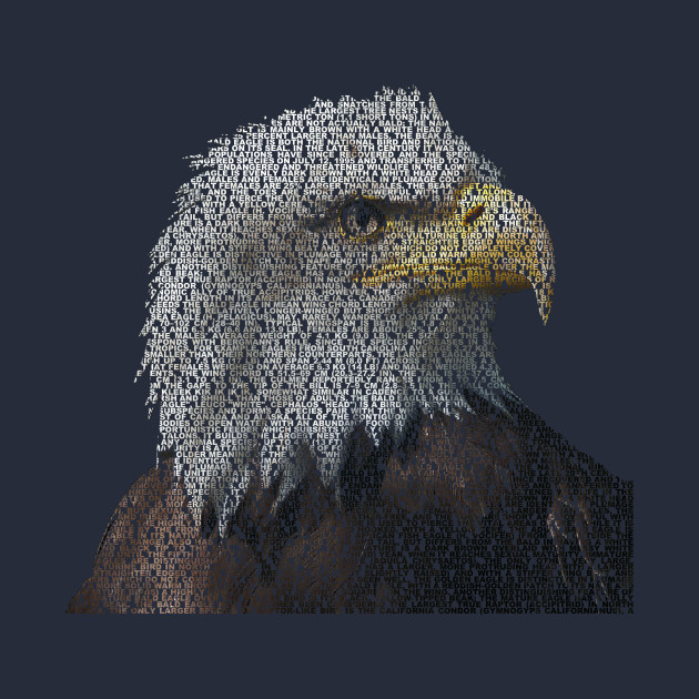 Bald Eagle Info Graphic