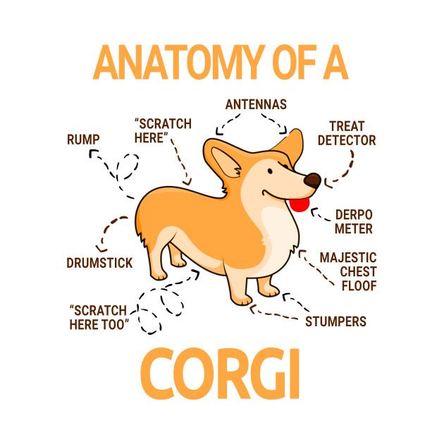 Dog Anatomy For Kids Choice Image Human Body Anatomy