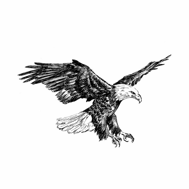 Eagle sketch pics — 1
