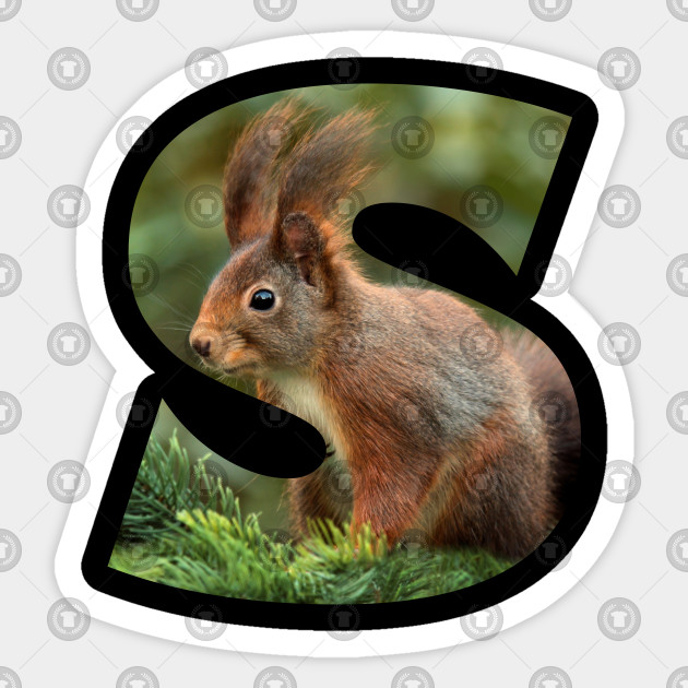 S - Squirrel 002