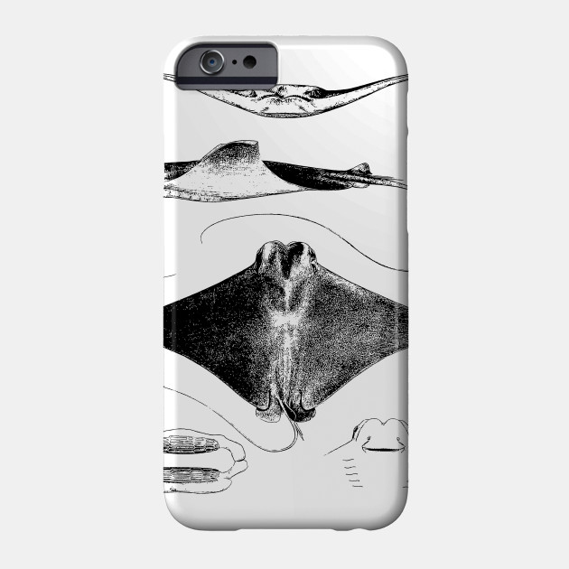 Stingray Anatomy Sharks Ocean Sea Animal Science Stingray