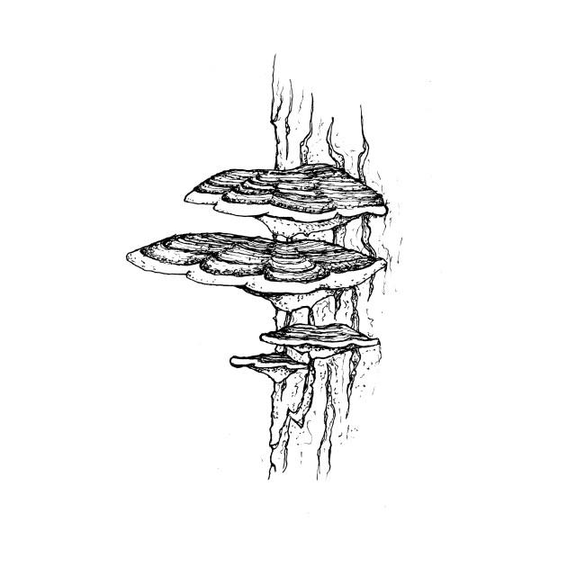 Turkey Tail Mushrooms