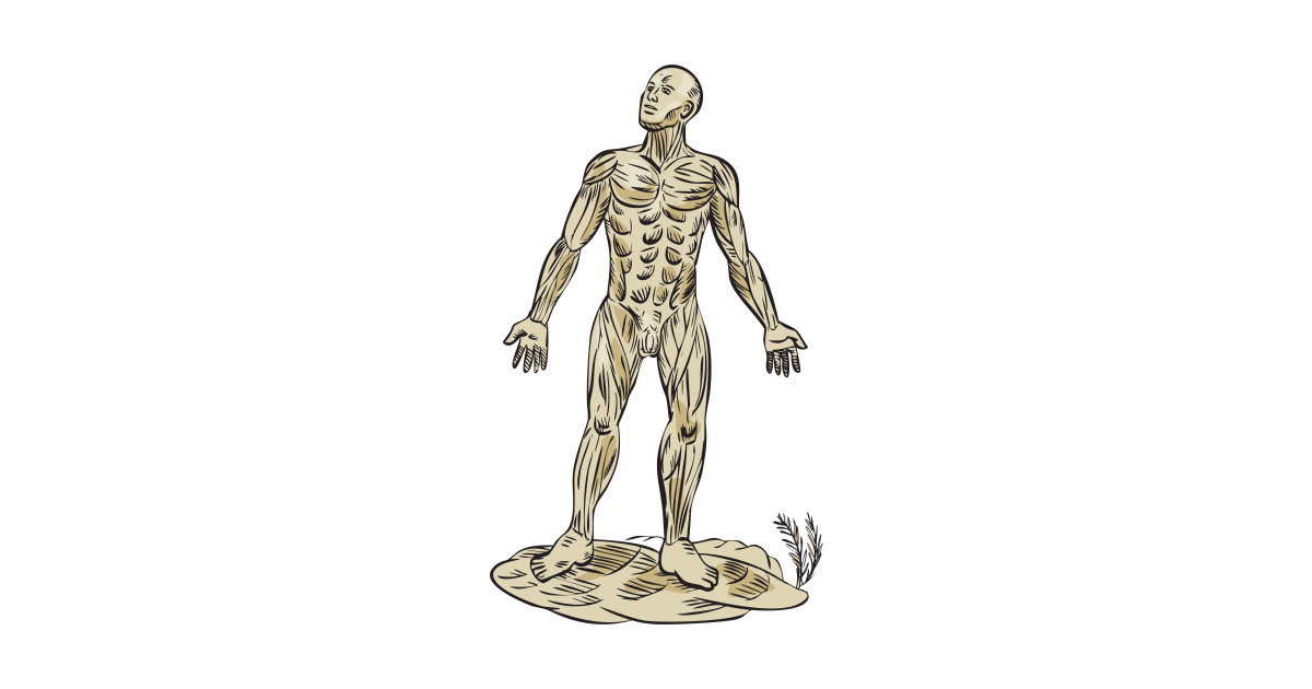 Human Muscle Anatomy Etching Human Muscle Anatomy Etching T
