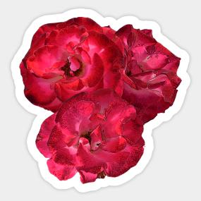 Pink flowers stickers teepublic pretty n pink sticker mightylinksfo