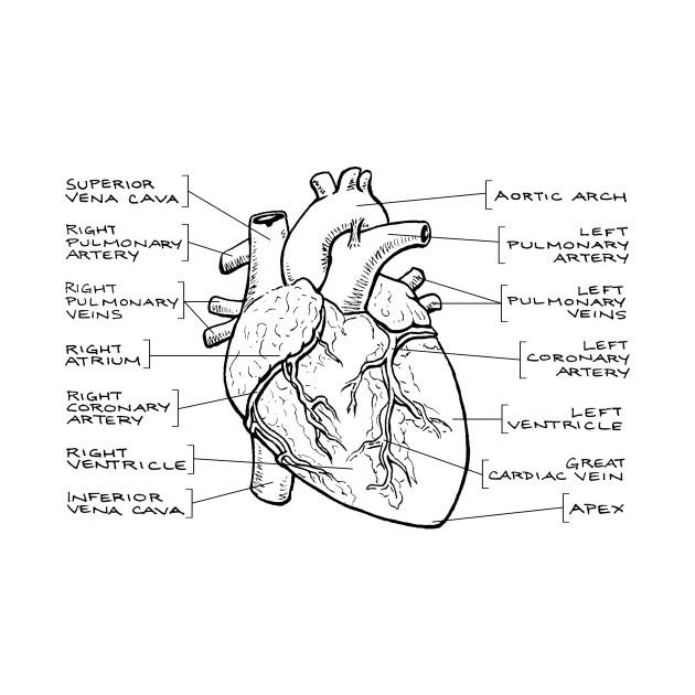 Anatomical Heart Diagram (Black Text) - Anatomical Heart ...