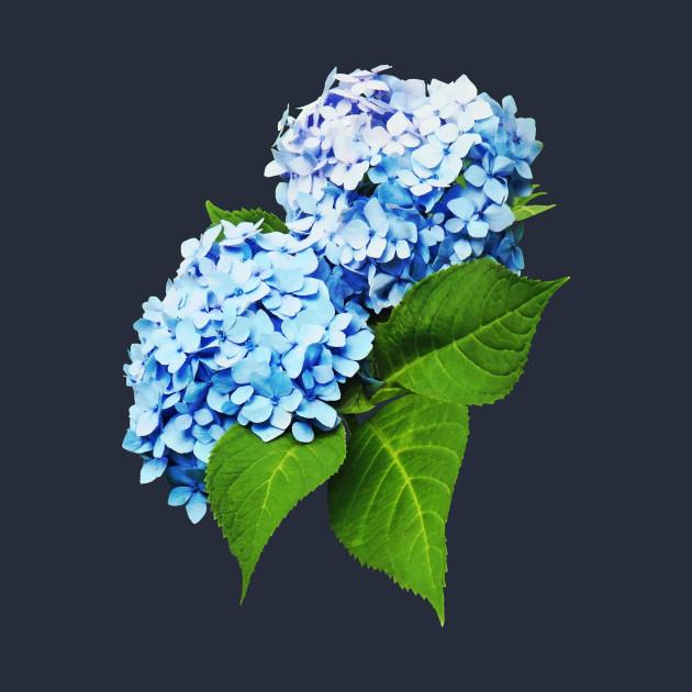 084e64eebddf Hydrangeas - Blue Hydrangea Profile Hydrangeas - Blue Hydrangea Profile