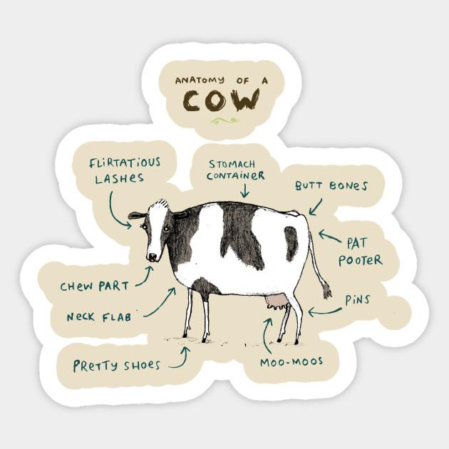 Anatomy Of A Cow Bovine Sticker Teepublic