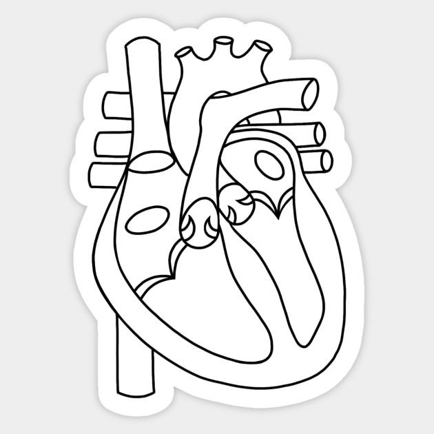 Diagram Of The Heart (blank) - Anatomy - Sticker