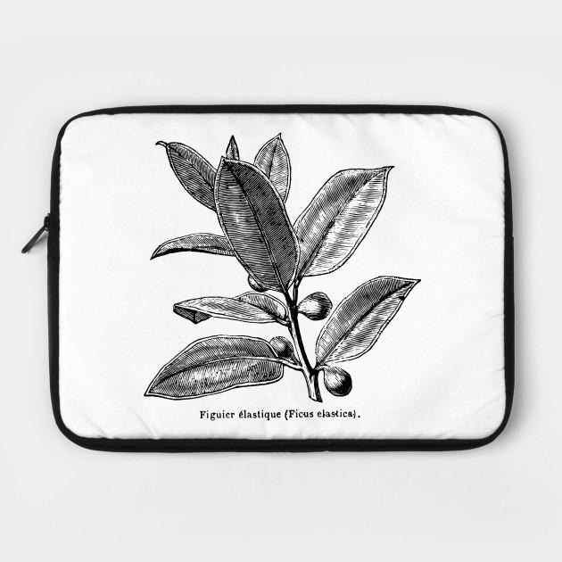 Ficus elastica (Rubber Tree) - Black Print