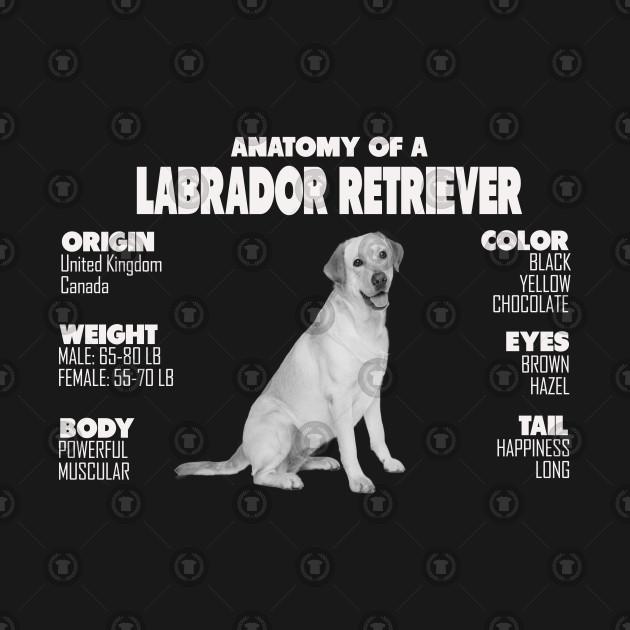 23303f90 Anatomy of A Labrador Retrieve - Labrador Retriever - Long Sleeve T ...