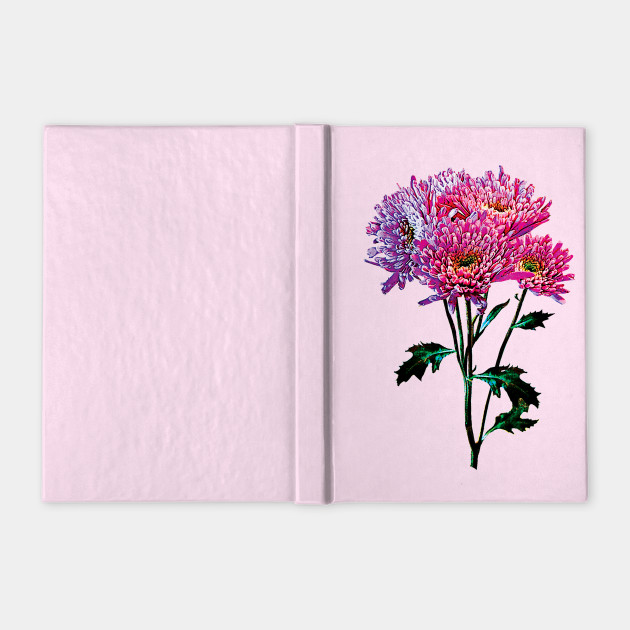 Chrysanthemums - Pink and Lavender Mums