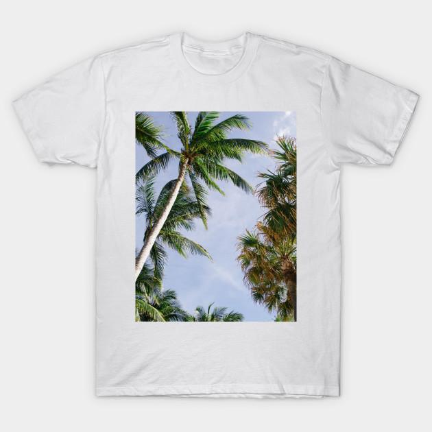 7857440a3d Beautiful Palm Trees