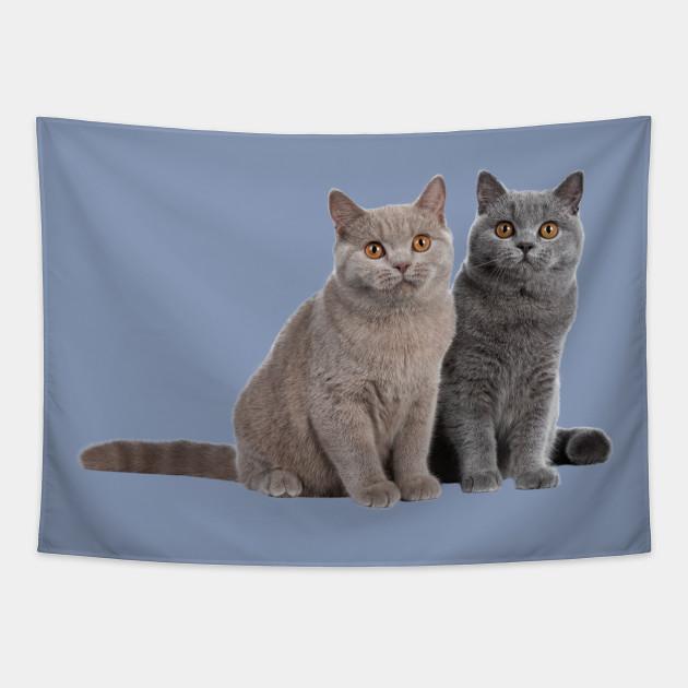 Lilac And Blue British Shorthair Cats British Shorthair Cat Tapestry Teepublic