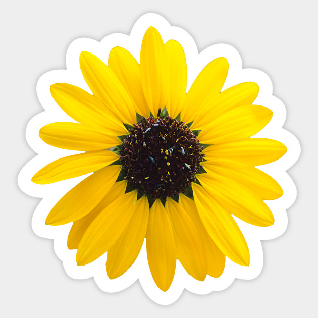 c78246d5f sunflower blossom design - Sunflower - Sticker | TeePublic