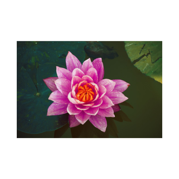 Lotus flower lotus kids t shirt teepublic 500796 1 mightylinksfo