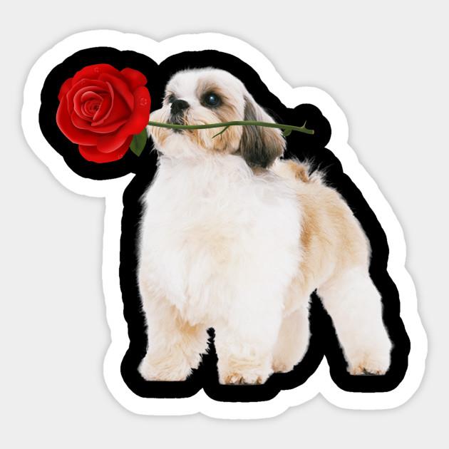 Cute Shih Tzu Dog with Flower Shirt