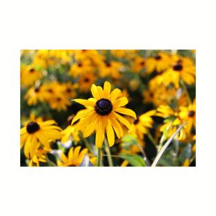 D.C. Flowers