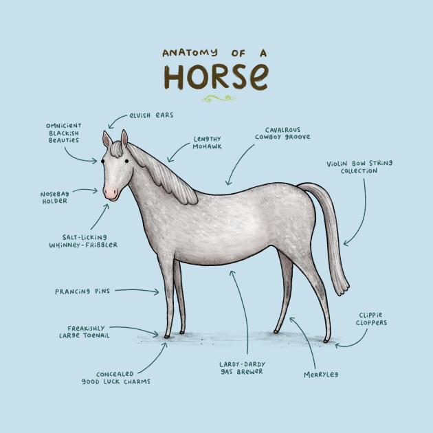 Anatomy Of A Horse Horse Kids Long Sleeve T Shirt Teepublic