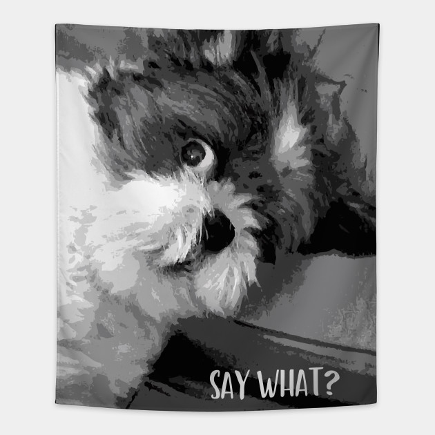 Image result for cute shih tzu pictures