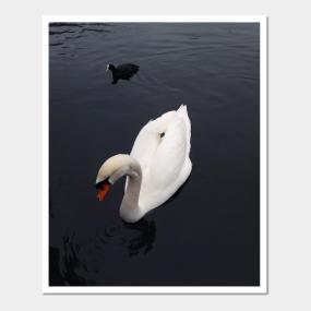 Swan Posters And Art Prints Teepublic