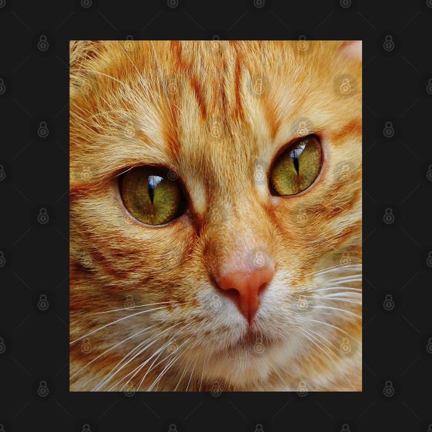 Abyssinian American Curl Cat Full Face Close Up Pretty Feline Pet