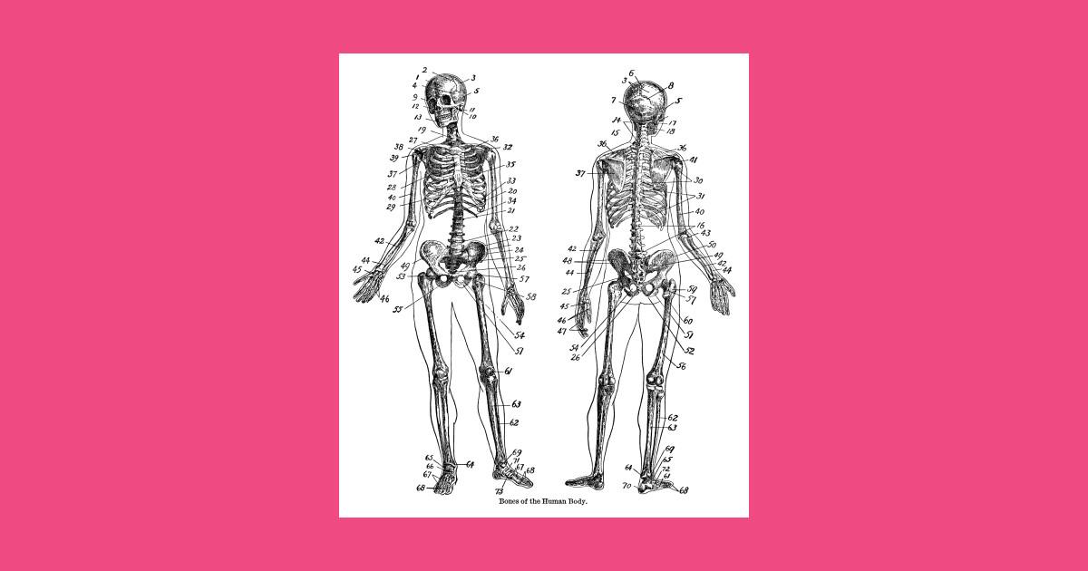 Skeleton Bones Of The Human Body Vintage Line Drawing Human Body