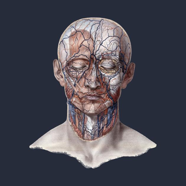 Human Anatomy Head with Face - Head - T-Shirt   TeePublic