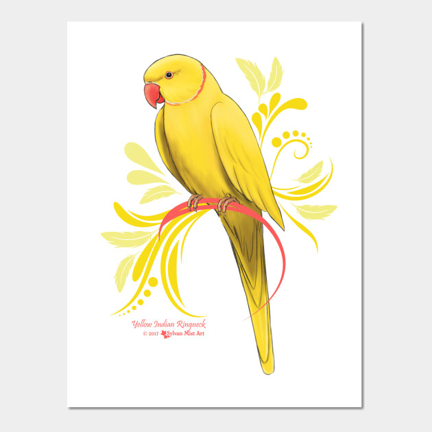 Yellow Indian Ringneck Parrot - Indian Ringneck Parrots - Wall Art ...