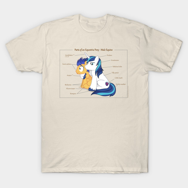 Pony Anatomy - Male Equine - My Little Pony - T-Shirt | TeePublic