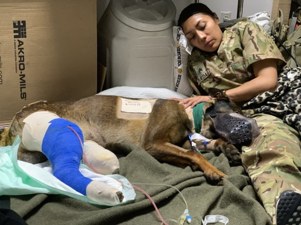 A U.S. Army Reserve soldier from the 149th Veterinary Detachment, Staff Sgt. Marisela Ruedas, sits with Kuno following surgery.