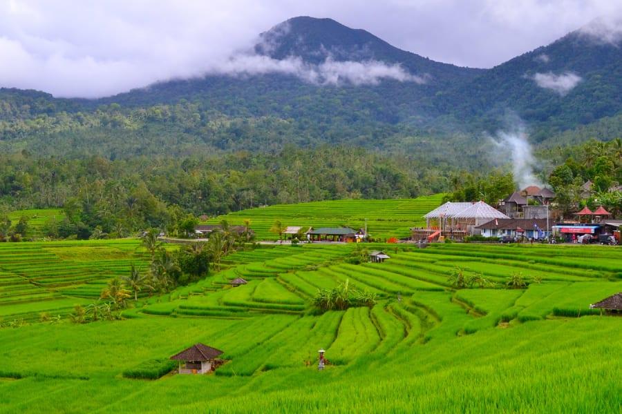 jatiluwih rice terrace bali temutamu