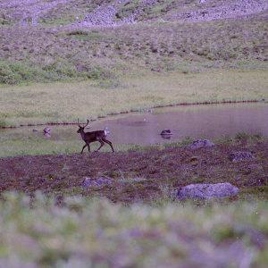 Alaska Range #2