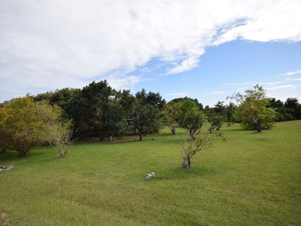 Established Orchard