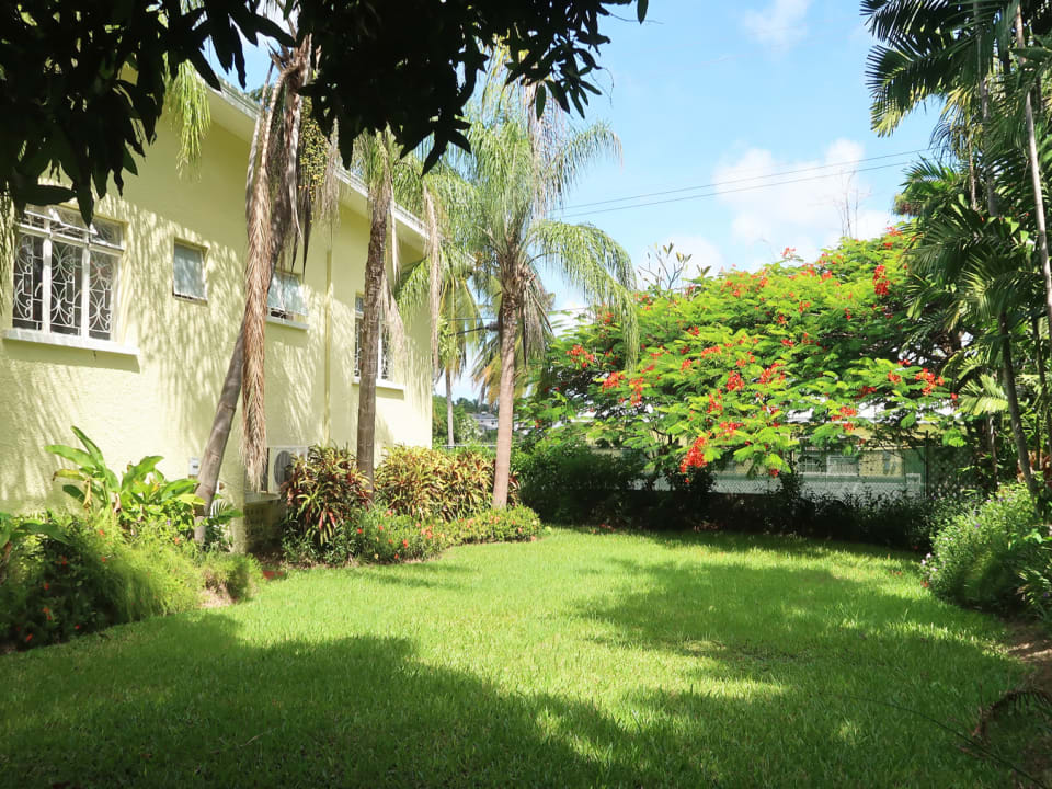 Garden with mature palms, flowering & fruit trees