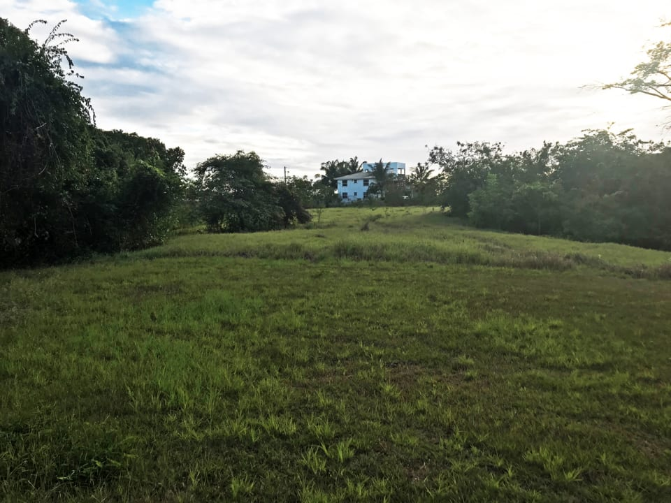 Looking west on the land