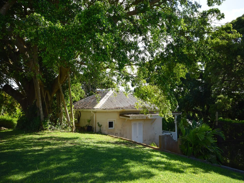 Cottage shaded by a large silk tree